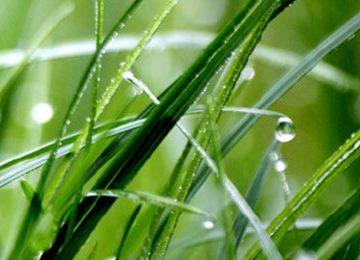 Trawy ogrodowe